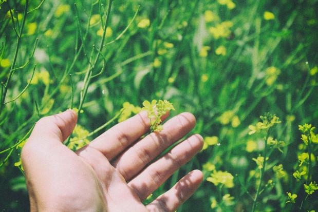 Nawet niewielki dotyk uruchamia u roślin mechanizmy obronne