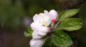 Jak dodatkowo wspierać rośliny, by wspomóc kwitnienie?