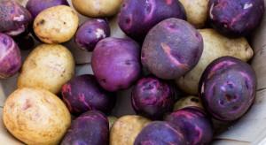 Peru: Nowa odmiana ziemniaka zawiera więcej żelaza i cynku niż tradycyjne odmiany