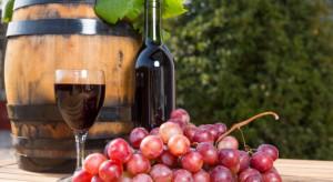 Polskie winnice mają szansę stać się dobrym jakościowo producentem win