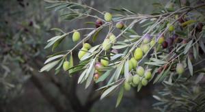 PIORiN: Xylella fastidiosa pojawia się na kolejnych gatunkach roślin