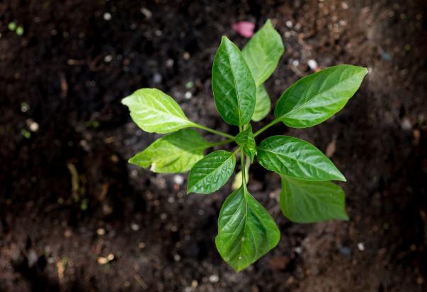 Jak zadbać o pojemność sorpcyjną gleby?