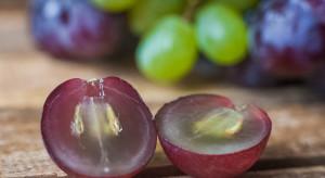 Australia: Znaleziono igły w winogronach z supermarketu