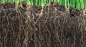Naukowcy pracują nad wyhodowaniem roślin, które kontynuowałby wzrost przy braku wody