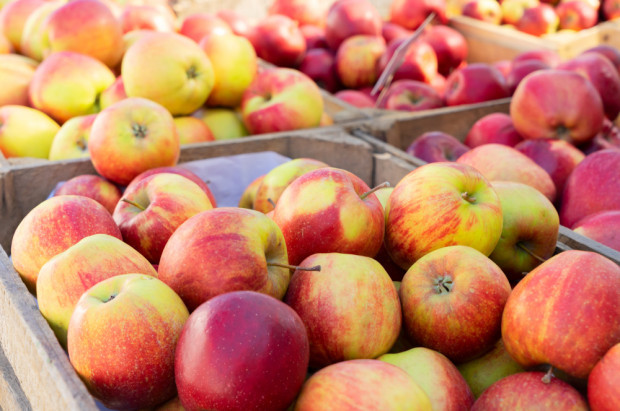 Bronisze: Wzrosły ceny jabłek odmiany 'szara reneta' i 'empire' oraz gruszek 'konferencja'