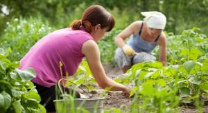 Maleje liczba gospodarstw ekologicznych. Problemem jest brak pracowników (video)