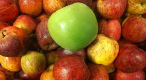 Stworzono specjalną powłokę wydłużającą trwałość warzyw i owoców