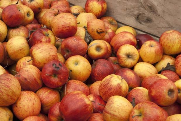 Mazowsze: Spadły ceny jabłek przemysłowych