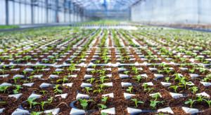Stymulacja wzrostu roślin: Jak prawidłowo przygotować rozsadę?