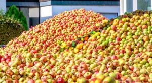 Eskimos: Program stabilizacji cen na rynku jabłek odniósł zamierzony skutek