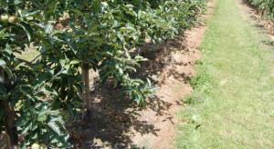 Biolodzy z UW odkryli bezpieczne dla środowiska herbicydy– testy wypadły obiecująco