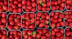 Hortplant: Dobór odmiany truskawek powinien zależeć od rynku zbytu (wywiad)