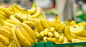 Carrefour komentuje sprawę pająka znalezionego wśród bananów w sklepie