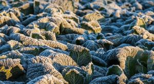Włochy: Mroźna pogoda wpływa na dostępność warzyw ekologicznych