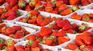 Wysokie ceny truskawek z importu