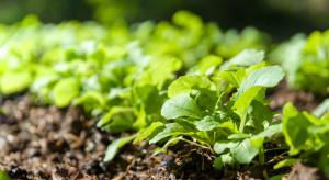 Eurostat: Od 2012 r powierzchnia upraw eko w UE wzrosła o 25 %