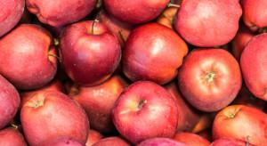 Egipt był największym odbiorcą jabłek z Polski (analiza)