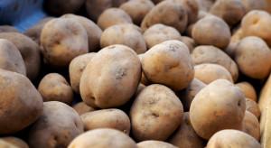 Granat z I wojny światowej znaleziony w transporcie ziemniaków z Francji