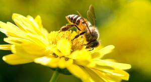 W Bawarii odbyła się inicjatywa obywatelska na rzecz ochrony pszczół i środowiska