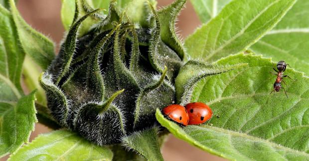Entomolog: populacja owadów na całym świecie maleje o 2,5 proc. rocznie