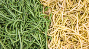 COBORU: Zaplanowano zarejestrowanie 31 nowych odmian warzyw
