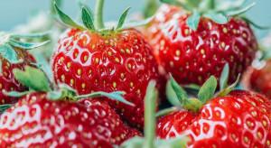 Nowe odmiany roślin sadowniczych w Krajowym rejestrze