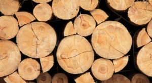 Nasila się proceder nielegalnej wycinki i kradzieży drewna