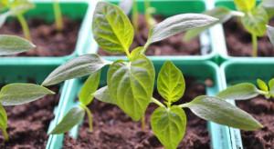Straty powodowane przez agrofagi wynoszą 220 mld dolarów rocznie