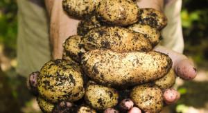 Kujawsko-pomorska Lista Odmian Zalecanych ziemniaka na rok 2019