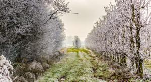 Pogoda: Mroźny początek weekendu, miejscami możliwe opady śniegu