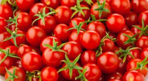 Włochy: Test DNA pomógł ustalić sprawcę kradzieży pomidorków koktajlowych