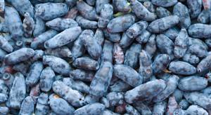 I Kongres Jagodowy na Rynku Elizówka – wskazówki dot. uprawy jagody kamczackiej