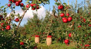 W 2017 r. Hiszpania, Włochy i Polska odpowiadały za 2/3 powierzchni upraw owoców w UE
