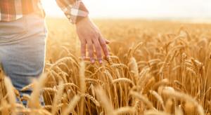 Resort rolnictwa proponuje zwiększenie nadzoru nad skupem płodów rolnych