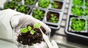 Zimna plazma pomoże roślinom w walce z chorobami?
