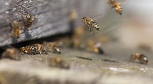 Warmińsko- mazurskie: pszczoły dobrze przetrwały zimę. Problemem jest warroza