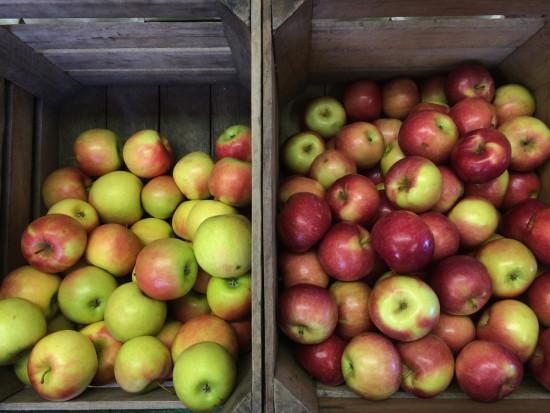 Polscy sadownicy mają do zagospodarowania ponad 1,2 mln ton jabłek
