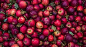 Rezygnacja szefa KOWR. Powodem interwencyjny skup jabłek?