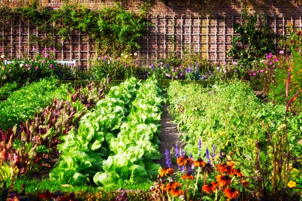 Ciech Sarzyna z ofertą dla amatorów ogrodnictwa