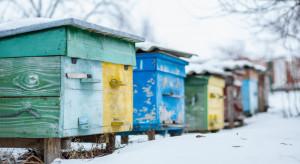 Podkarpackie: Pszczoły w dobrej kondycji przetrwały tegoroczną zimę