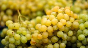 Tesco uszkodzone winogrona przerabia na gin
