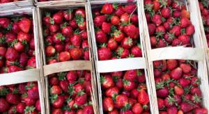 Czego można oczekiwać w nadchodzącym sezonie truskawkowym?