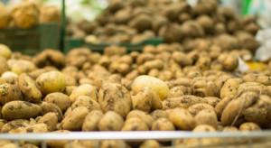 Rynek ziemniaków: Raport eksperta IERiGŻ