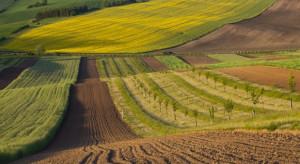 FAO: Rosja ma najwięcej gruntów ornych na mieszkańca