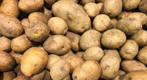 Europejski rynek ziemniaka pod presją. Analiza BGŻ BNP Paribas