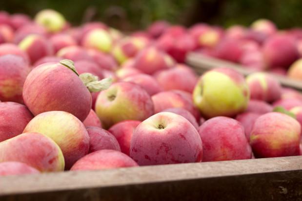 Ceny są coraz niższe. Sytuacja na rynku jabłek wymaga dużych zmian
