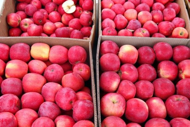 Bronisze: Ceny jabłek są wciąż katastrofalnie niskie