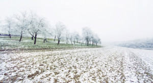 Zima nie odpuści. Po chwilowym ociepleniu powróci śnieg i mróz