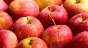 Kanada zainteresowana importem jabłek z Ukrainy