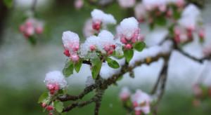 Rusza wiosenna sprzedaż dotowanych ubezpieczeń upraw rolnych